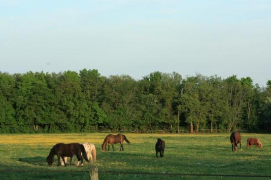 Le pré des poneys